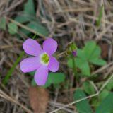 Wildflower 5812.jpg