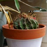 Cactus in a pot 5791.jpg