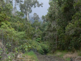 Papa section West fenceline