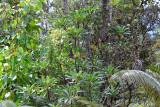 Native Foliage