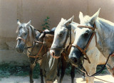 Horse Holiday in Pakistan