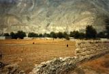Fields behind main bazaar