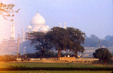 Taj and trees