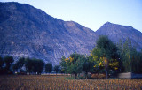 Gilgit fields