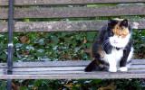 Dolly the tabby cat