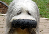 Love Dogs? (Dog Photos)