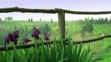 Tuscan (Toscana) Iris