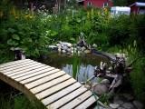 In Eli`s garden