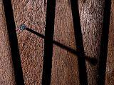 Wood and Nail  by MCsaba