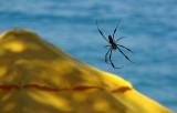 Umbrella, Spider and the Sea
