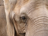 4thelephant*  by Brandon Musgrove
