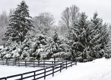 morning, snowby inframan