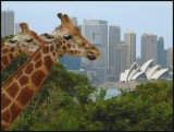5th: Africa Meets Sydneyby Dave Smith