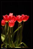 2nd: * Tulips
