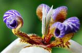 8th: Tropical flowerby jrdu