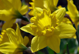 7th: Rhapsody in Yellow