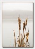 4th: foggy pond