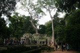 Ta Prohm has been left in much the same condition in which it was found: trees growing out of ruins in jungle surroundings