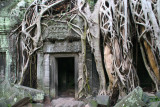 Ta Phrom will be forever known as the temple where Angelina Jolie filmed Lara Croft - Tomb Raider movie