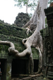 Ta Prohm is a temple built in the Bayon style largely in the late 12th century