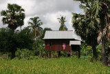 rice field and Cambodian country house