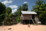 Cambodian country house and sugar palm trees