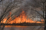 Controlled Burn at Crab Orchard NWR