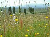 Spring in Tuscany