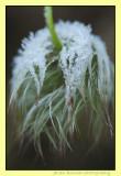 winter hairdo