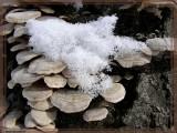 Au menu ... champignons à la neige.