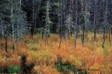 Lichen Woods