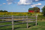Barn with Goldenrod