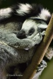 Cozy Sleeping