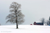 Frosty Tree and Barn