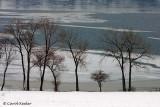 Trees Along the Lake