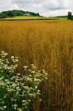 Time for Harvest