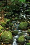 Adirondack Mossy Stream