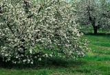 The Grandeur of Spring
