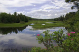 The Moose River