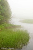 Morning on the Moose River