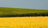 Rural Stripes
