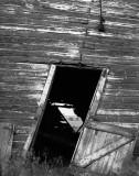 Collapsing Barn-Oklahoma