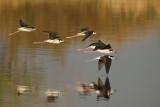 S.California birding trip, April 2007