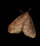 Kleine wintervlinder, 27 nov. op raam