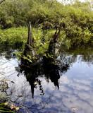 Hoogveen moeras ,  Drenthe