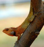 Animals of Indonesia