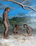 Display in Sangiran Museum