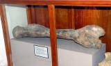 Femur of Stegadon Trigoncephalus