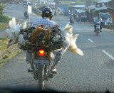 Indonesia from the Passenger Seat 2007