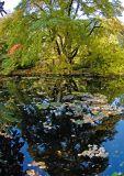 Benmore Botanical Gardens (revisited) - Dunoon, Argyll, Scotland. Oct '06